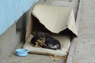 Миколаївські зоозахисники повідомили про сутички біля центру, де масово винищують собак