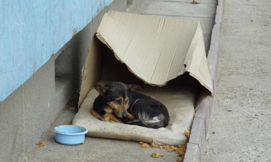 """""""Оккупировали наш город"""": жители Николаева жалуются на бродячих собак, которые бросаются на прохожих"""