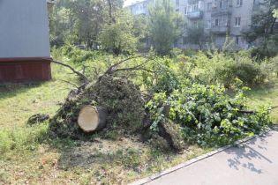 Ураган в Кременчуге: на детской площадке дерево упало на семью