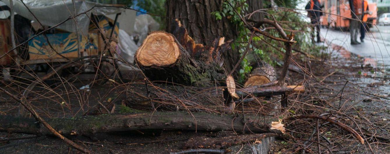 На Запорожье во время обрезки деревьев ветка убила прохожую