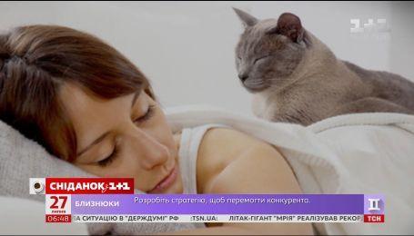 Почему коты мурлыкают