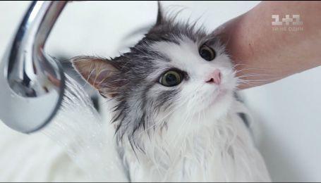 О наших любимцах: как уменьшить стресс котов от купания