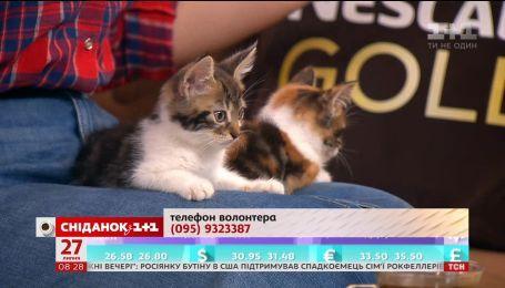 Двомісячні кошенята Люк і Глаша шукають господарів