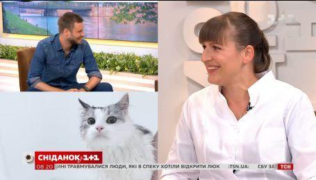 Як правильно купати котів - поради ветеринара Вікторії Шерстюк