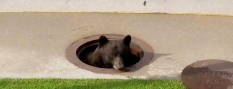 В Канаде школьники отравились спреем для отпугивания медведей