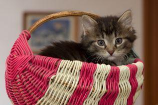 Котики – це не лише любов: Супрун розповіла про користь для здоров'я від домашніх улюбленців
