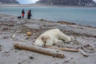 Неподалеку от Северного полюса полярный медведь атаковал туристов