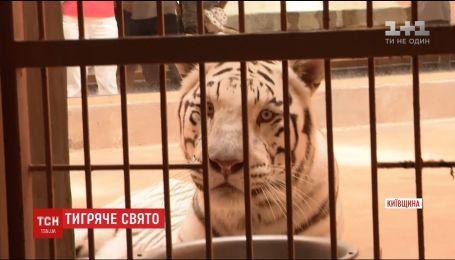 В частном зоопарке под Киевом устроили праздник для тигра