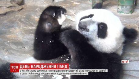 У Китаї відзначили уродини єдиної у світі трійні панд