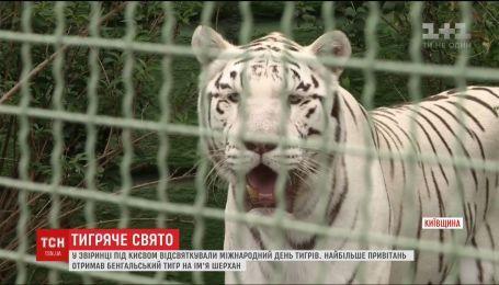 У звіринці під Києвом відсвяткували Міжнародний день тигрів