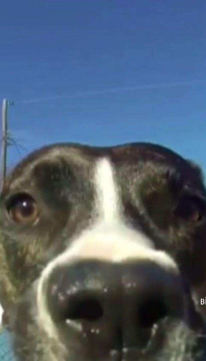 Пес стал звездой Интернета, когда похитил камеру хозяина и снял свой побег