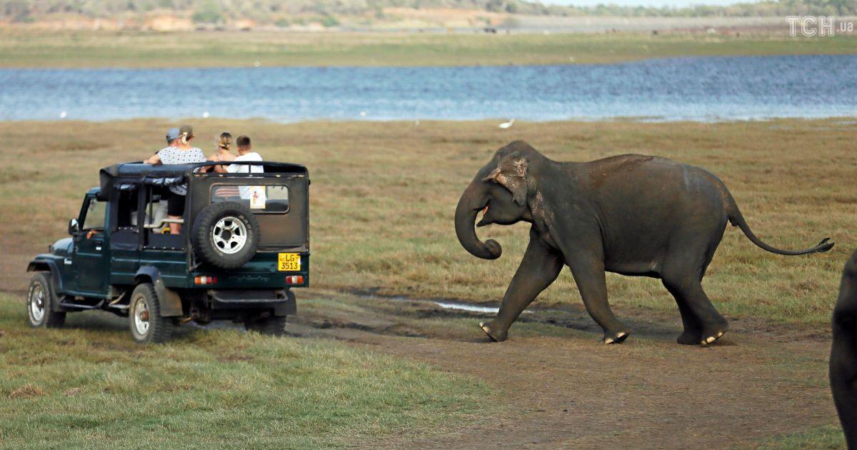 Забавки у воді та гонитва за туристами: як розважаються слоненята у заповіднику на Шрі-Ланці