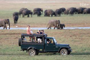 На территории национального парка в Зимбабве слон затоптал туристку