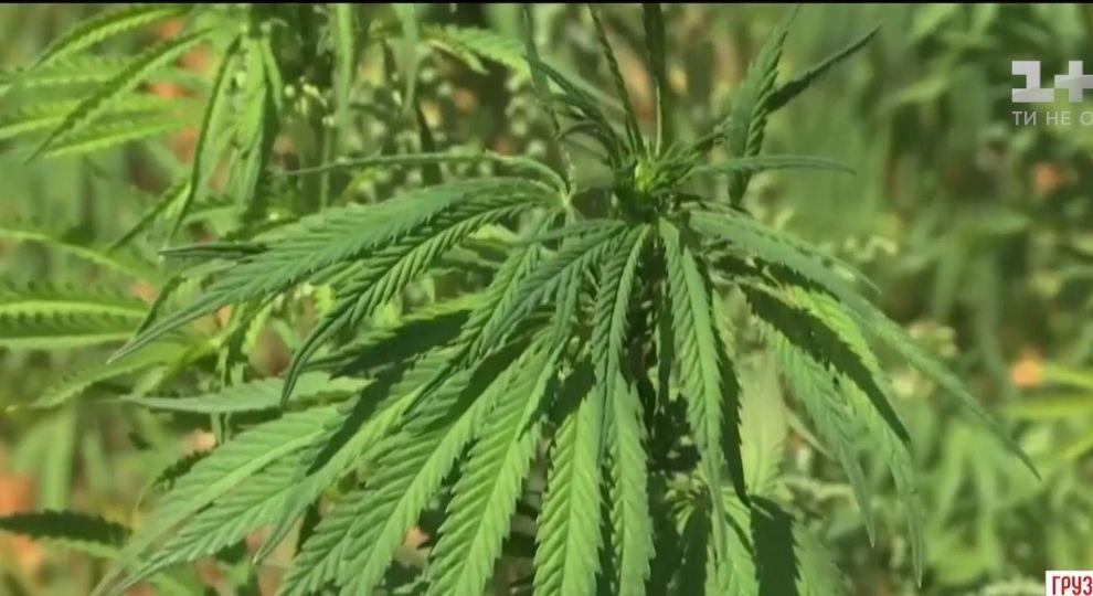 Марихуана онлайн видео гашиш вред марихуана
