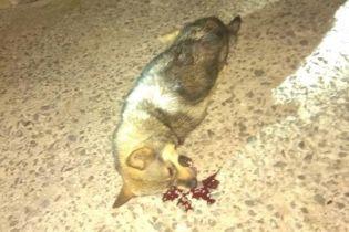 У Хмельницькому чоловік викинув собаку з 9-го поверху — зоозахисники