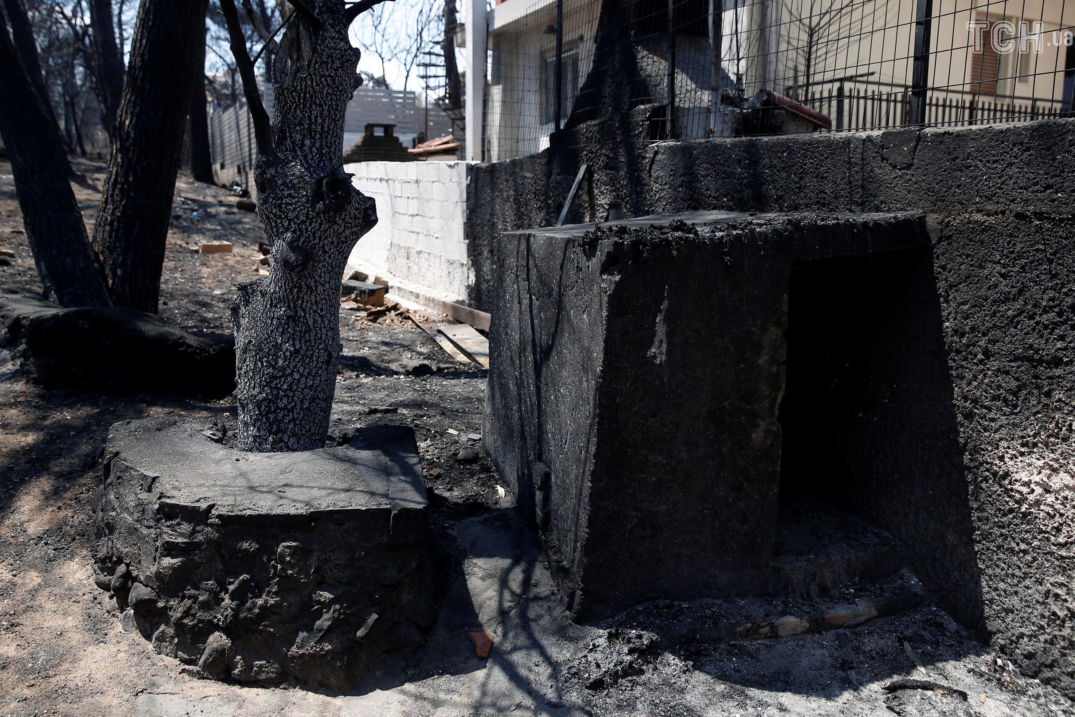 Собака, який вижив у пожежі в Греції_2