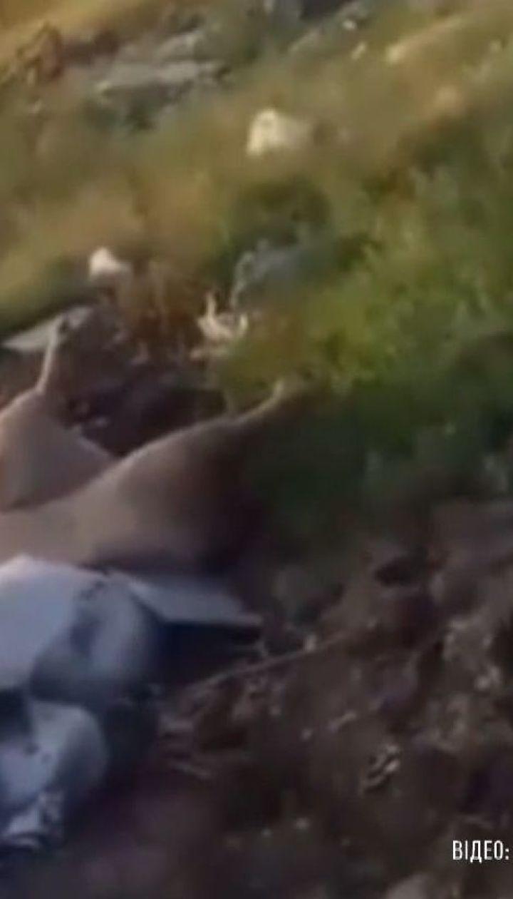 У Павлограді невідомі викидають туші мертвих свиней неподалік приватних будинків