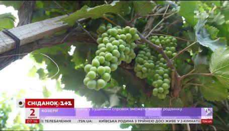 Відмова від виробів з ртуттю і подешевшання винограду – економічні новини