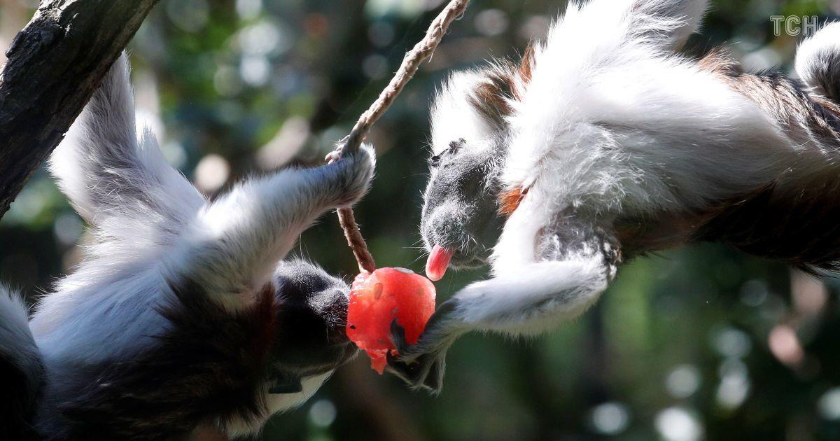 Замороженные фрукты и водные процедуры: как животных спасают от жары в зоопарке в Италии