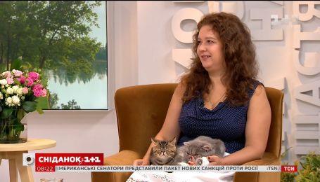 Плюшевые котики: как ухаживать за экзотами