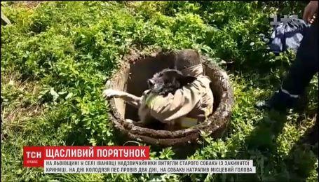 На Львовщине чрезвычайники вытащили старую собаку из колодца