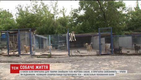 В Киеве возле приюта для животных нашли тела мертвых собак