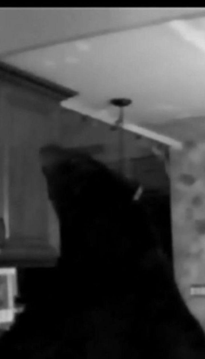 Черный медведь устроил беспорядок в доме 95-летней гражданки Канады