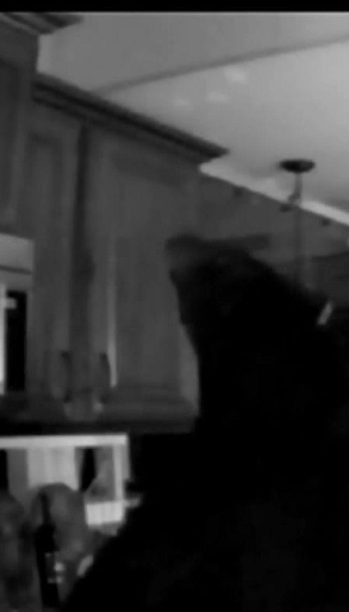 Чорний ведмідь влаштував безлад у будинку 95-річної громадянки Канади