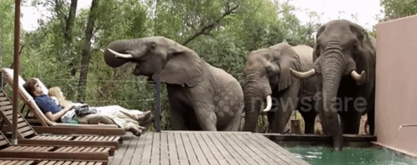 Троє слонів вирішили попити води із басейну, налякавши до нестями пару, що відпочивала поруч