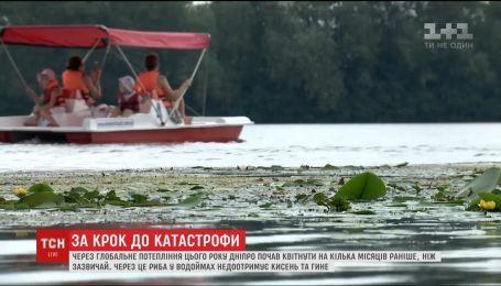 За крок до катастрофи: раннє цвітіння Дніпра загрожує рибам та людям