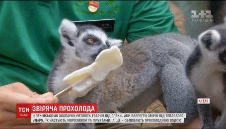 В пекинском зоопарке решили спасать животных от жары мороженым