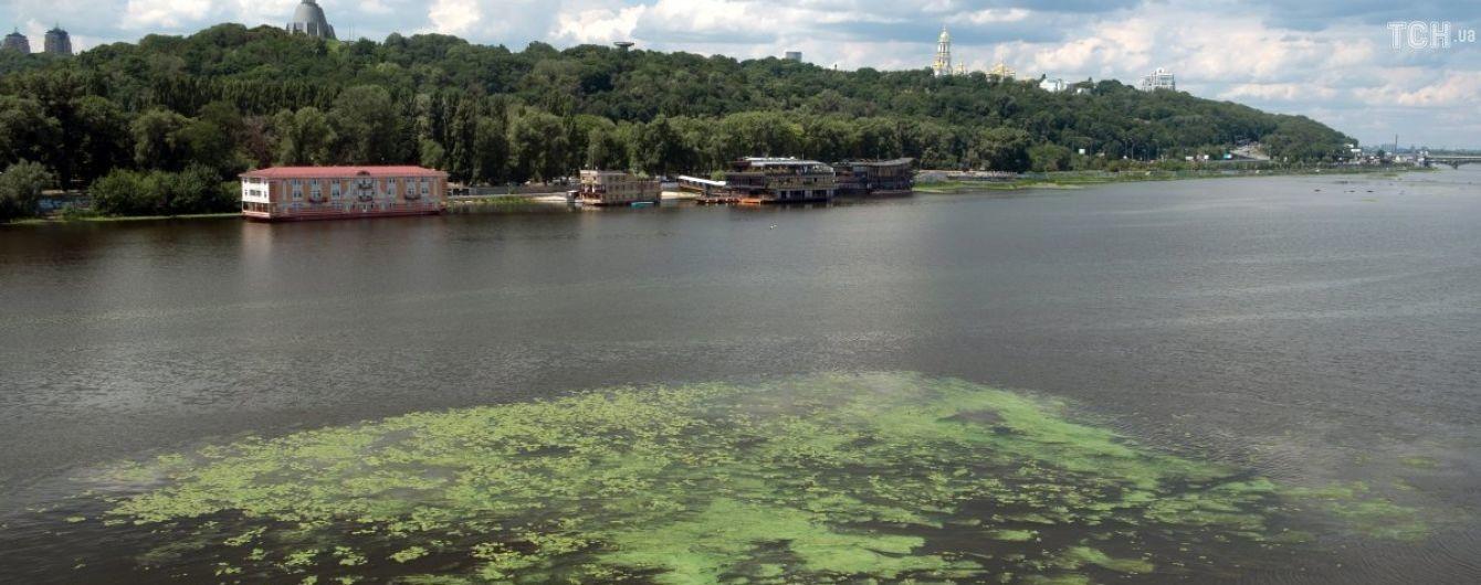Водоросли убивают Днепр: рыба гибнет от удушья, а люди идут на риск