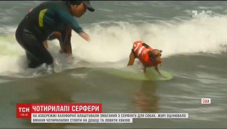 В Сан-Франциско устроили соревнования по серфингу для собак
