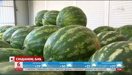 Сколько стоят августовские ягоды и фрукты и подешевеют ли они
