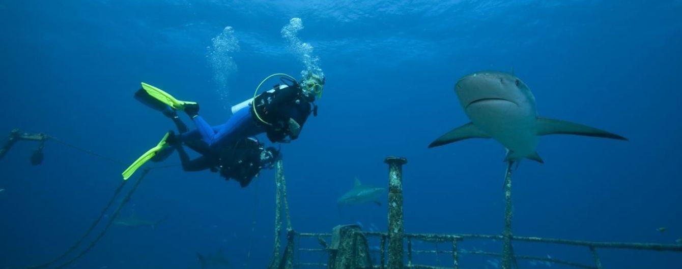 В Єгипті знайшли рештки туриста із Чехії, якого з'їла акула