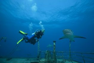 В Египте нашли останки туриста из Чехии, которого съела акула