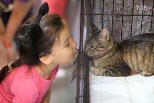 Всесвітній день котів. Які українські пухнастики потрапили до списку найпопулярніших
