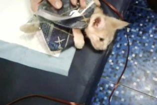 """""""Она съела кота!"""". В метро Киева бабушка пыталась загрызть котенка на глазах у людей"""