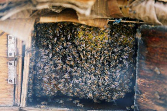 В Україні цього року загинуло до 45 тисяч бджолиних сімей, кожна з яких коштує 2 тисячі гривень
