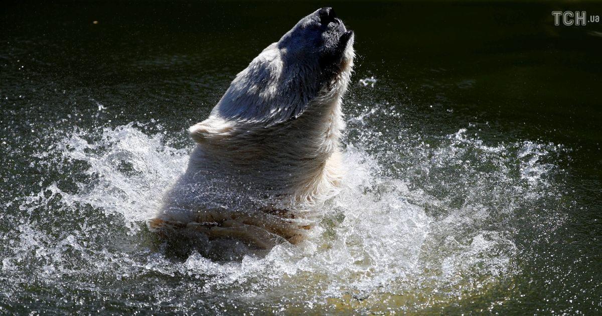 Плавание и фрукты со льдом: как животные в европейских зоопарках переживают безумную жару