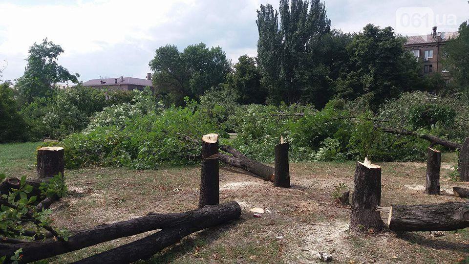 запоріжжя вирубка дерев