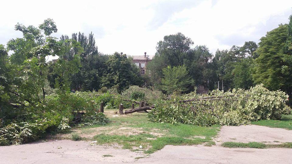 запоріжжя, вирубка дерев 1