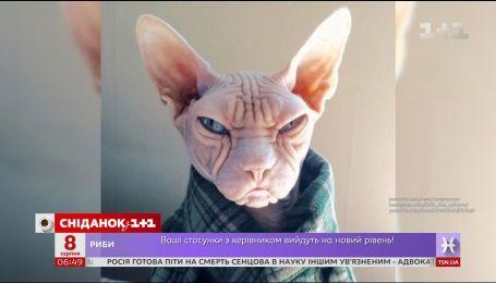 Самые популярные коты Интернета