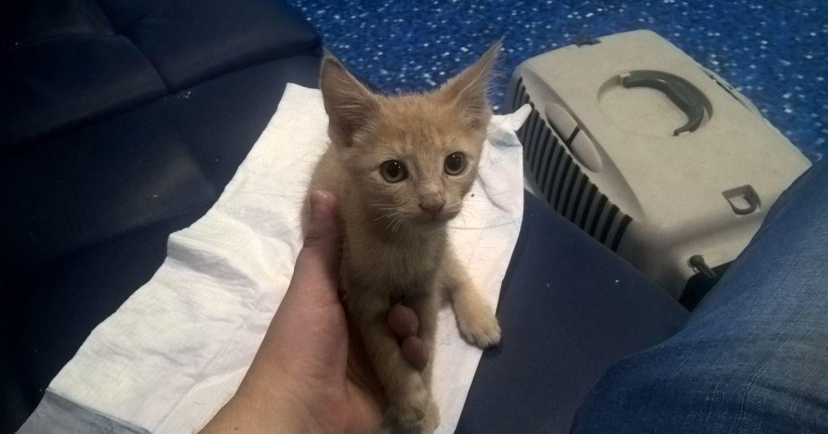 Поліція встановила особу жінки, яка покусала кота у метро Києва
