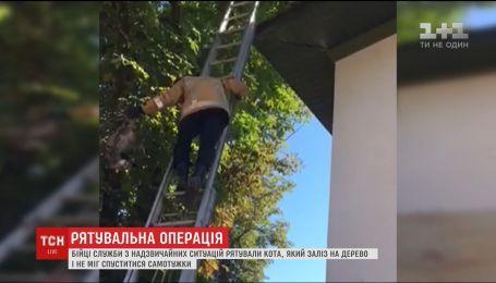 В Могилеве-Подольском чрезвычайники провели спецоперацию по спасению кота
