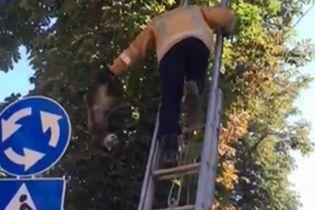 На Вінниччині рятувальник за хвіст стягнув із дерева кота