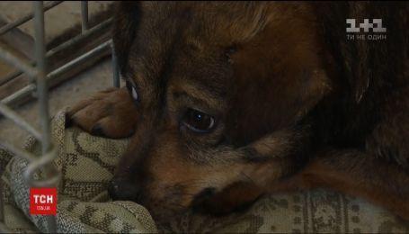 У Надвірній собака понад рік просидів у теплотрасі під землею