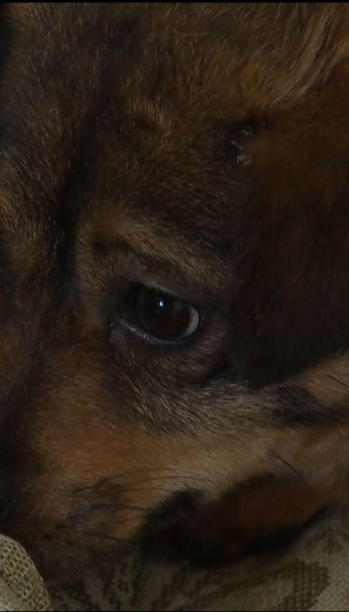 В Надвирной собака более года просидела в теплотрассе под землей