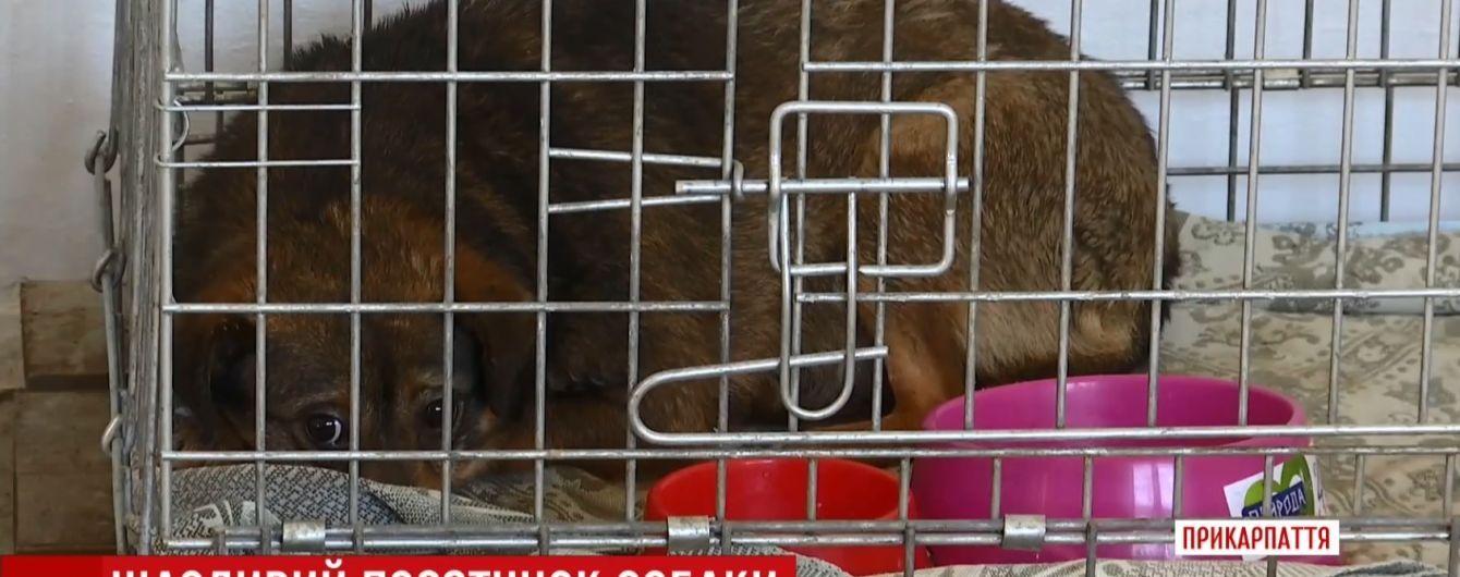 На Прикарпатті врятували переляканого собаку, котрий більше року прожив у теплотрасі