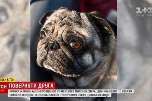 Украдений у Києві мопс Каспер знайшовся завдяки сюжету ТСН